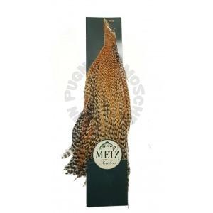 Mezzo collo di gallo Metz -3 Cree