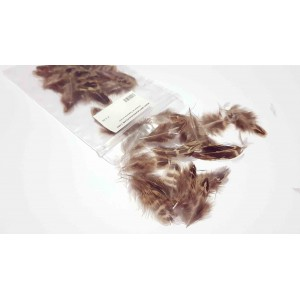 Dark female pheasant feathers