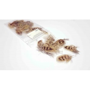 Light female pheasant feathers