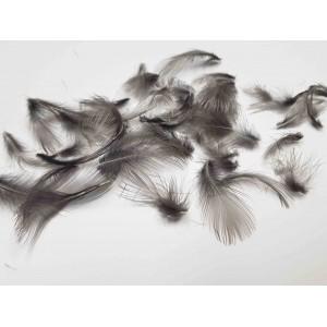 Moorhen feathers