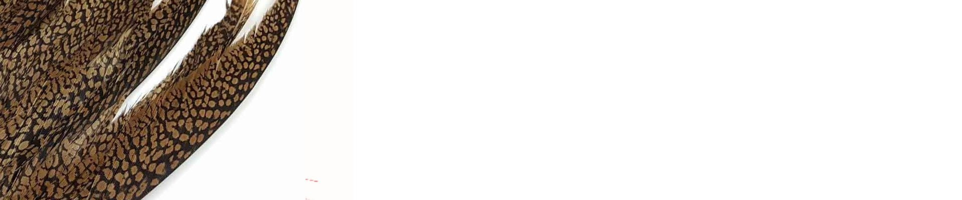 Piume di Fagiano